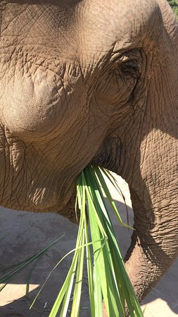 Love and more love for elephants