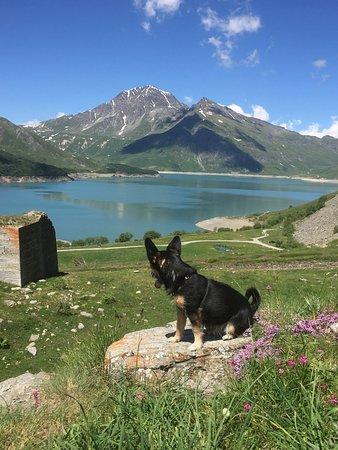 La mia belva al laghetto del Moncenisio