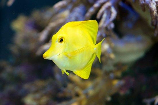 Leidschendam, Nederländerna: een zoutwater koraal vis