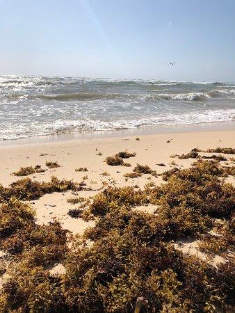 Seaweed is nasty 🙁