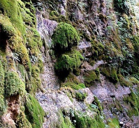 Masciago Primo, إيطاليا: Petrifying springs with tufa formation (Cratoneurion)