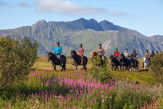 Riding tour Lofoten by horse, from...