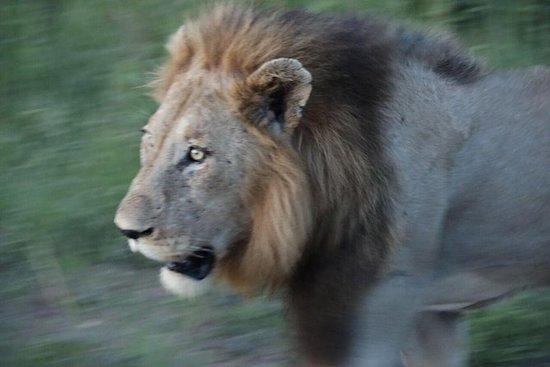 Safari di mezza giornata in
