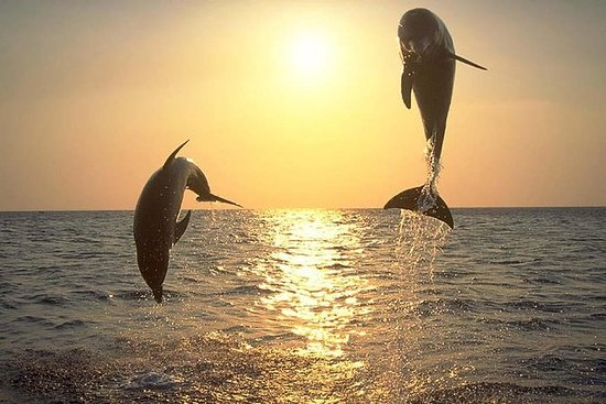Sunset Dolphin Watch