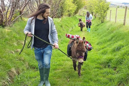 Scenic walks with mini donkeys, picnicking in the beautiful Brecon...