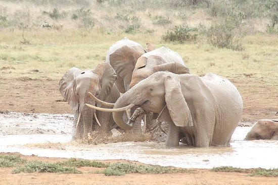SAFARI - 2 DAYS TSAVO EAST