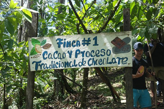 Oreba Chocolate Tour (Bocas Town) - Updated 2019 - All You