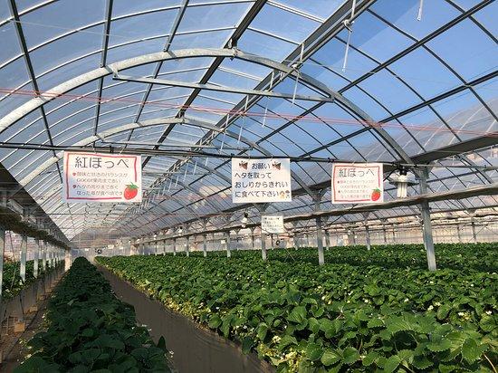 Yokoyama Farm