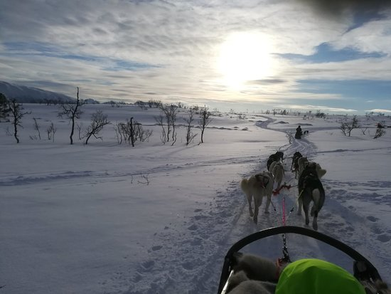 Husky Sledding Ride Including Campfire Lunch from Tromso Photo