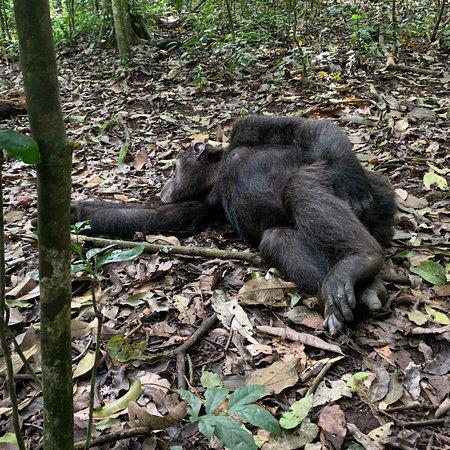 Och te szympansy !!