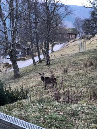 One of five deer that visited Parus.