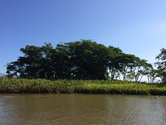 Mangroves tour