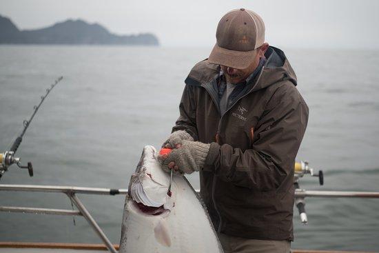 Alaska Coastal Explorer
