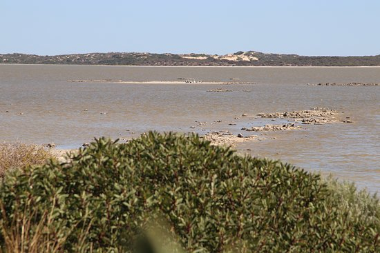 Salt Creek, Австралия: View from the Observatory Deck, Pelicans on a small island mid photo