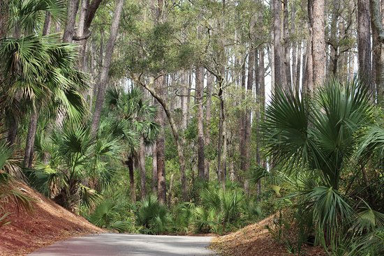 The beautiful forests of Hunting Island.