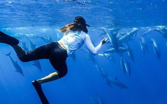 Oahu Snorkel Cruise: Swim with...