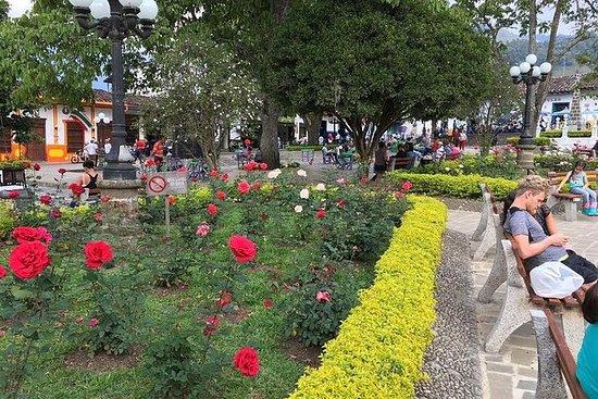 Plantación de café en Jardín y visita...