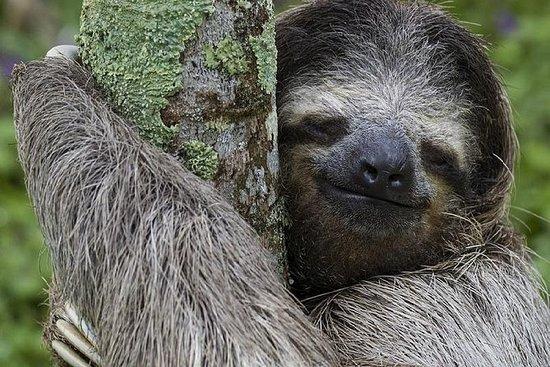 Iguanas, Macaws, monkeys & sloth...