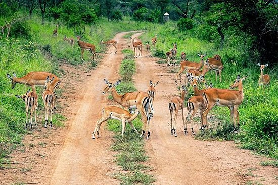 2-dagers Akagera National Park...