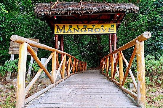 Bintan Mangrove Discovery Tour