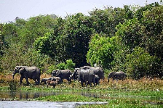 4 giorni Murchison Falls Safari