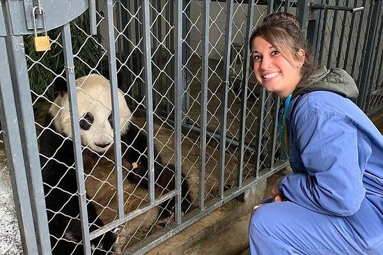 Experiencia de alimentación de panda...