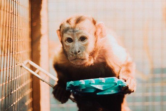 Udivitelny Zoo