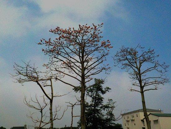 Zhongli, Taoyuan: 木棉花火紅