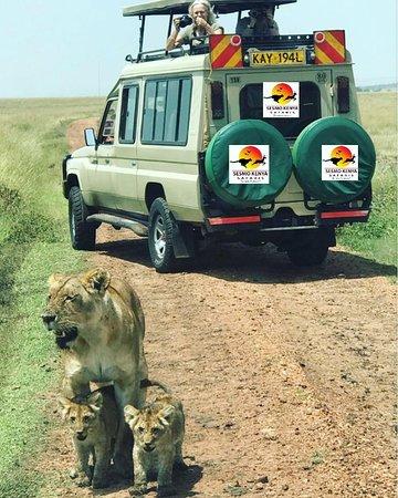 Sesmo Kenya Safaris
