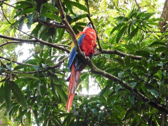ฮอนดูรัส: Cartoline da Copan, Honduras