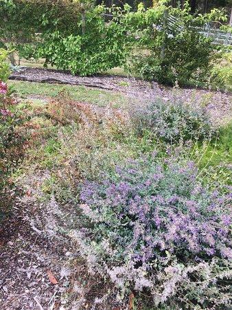 Rocky Cape, Australia: Eagles Roost sensory garden