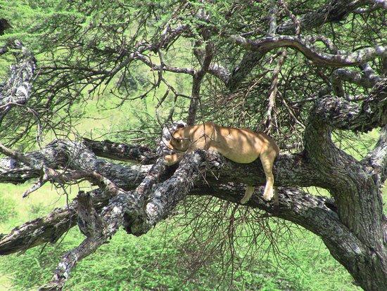 Lasi Tours & Safaris