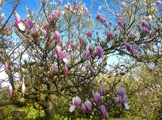 Flower Delivery Enfield | Bloom & Wild | Send Flowers