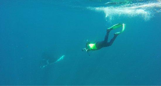 Sirenas Diving Costa Rica: Manta with Popeye