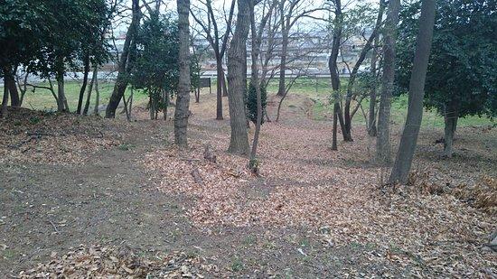 Ota, Nhật Bản: 古墳上から見た造り出し部