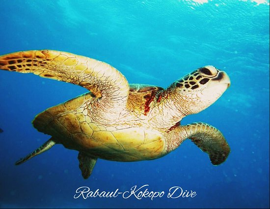 Rabaul - Kokopo Dive