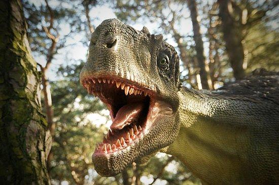 Solec Kujawski, Polska: Zachęcamy do odwiedzenia Parku Dinozaurów, w którym znajduje się nasza restauracja!