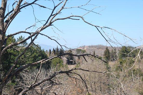 Vlachokerasia, Greece: Ο ξενώνας από μακριά, μέσα από το δάσος