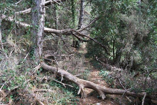 Vlachokerasia, Greece: δάσος Σκιρίτιδας