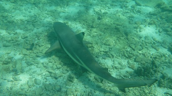 Shark Point Ko Phi Phi Don - 2019 What to Know Before You Go