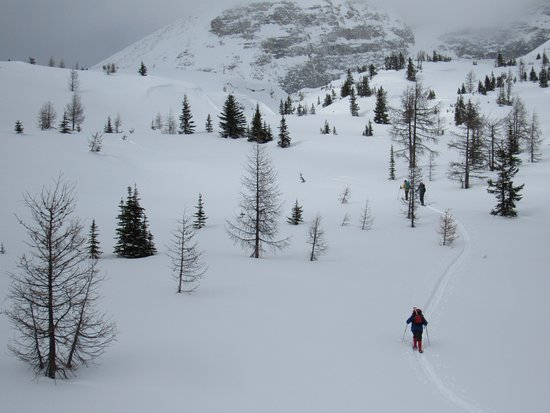 Kootenay Rockies, Kanada: Human snowshoers share these open meadows with snowshoe hares.