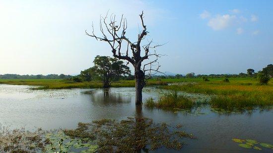 Landscape - Picture of Jungle house Yala, Tissamaharama - Tripadvisor