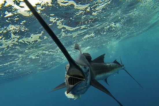 Tour de pesca de quatro horas em...