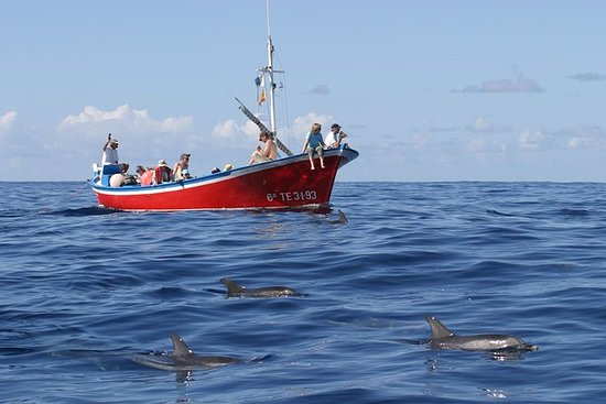 Hval og Dolphin Watching på...