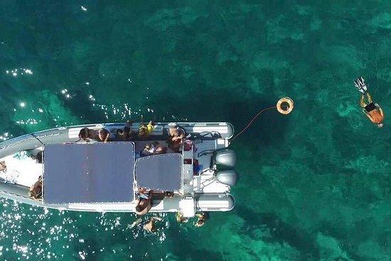 Paseo en barco con paradas en Porto Selvaggio, Santa Caterina e...