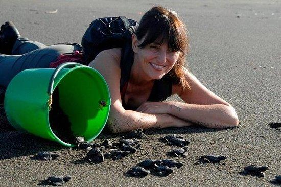 哥斯达黎加探索之旅:帮助保护海龟