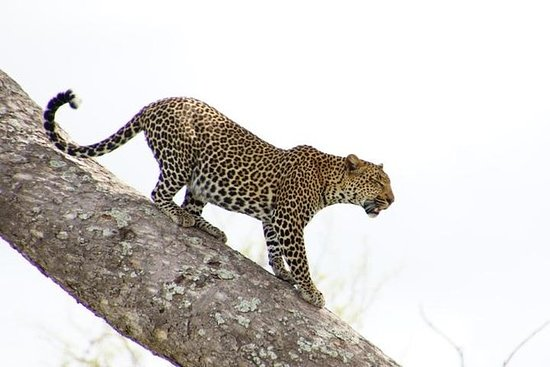 Safari de 2 jours à Mikumi au départ...