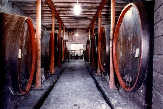 Montefalco最古老的釀酒廠之一的品酒和酒窖之旅