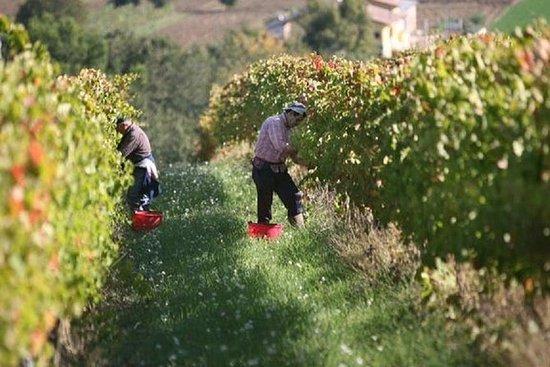 Vin Tour och provsmakning i ...