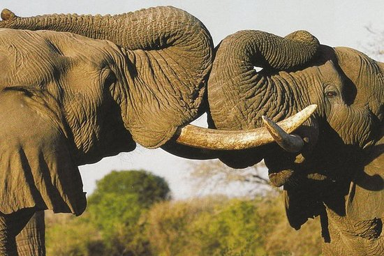 Safari de vida silvestre en la ruta...